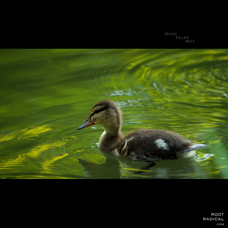 Duck-Tales