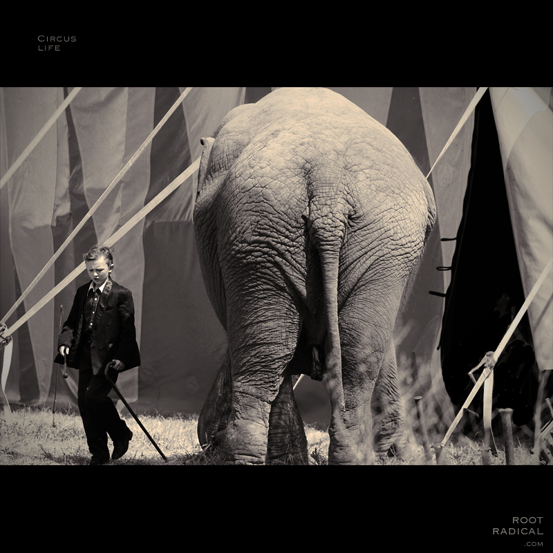 Boy with elephant in front of circus