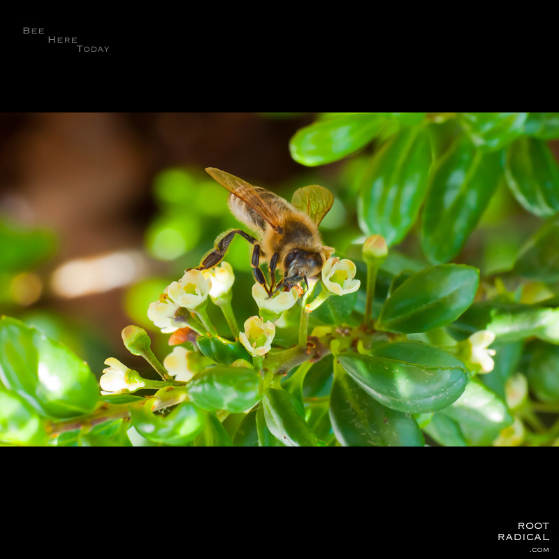 Bee closeup photo, sitting on a plant