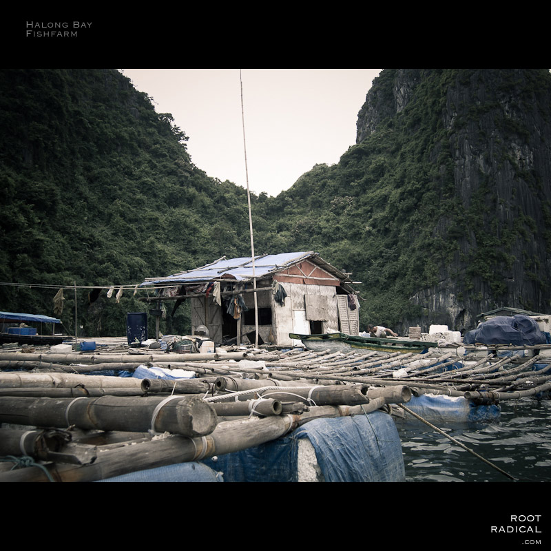 Halong bays typical swiming fishfarm