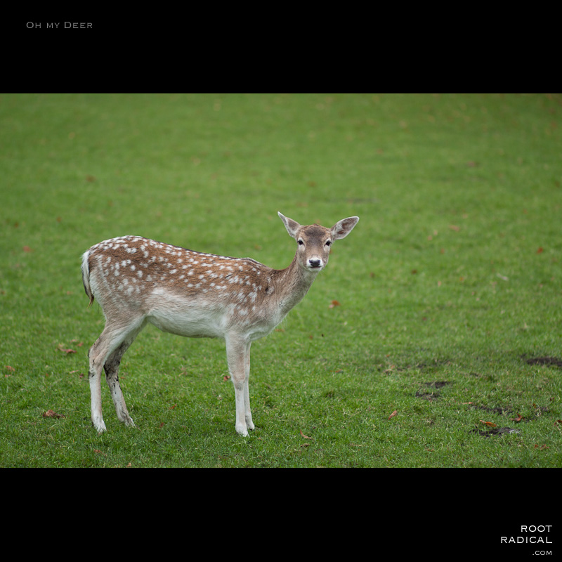 Wonderful deer standing on a field